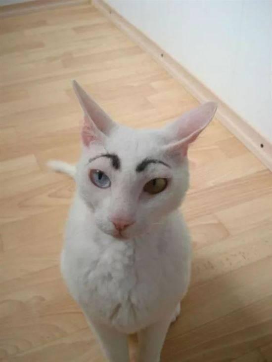 кошку накрасили картинки появляются